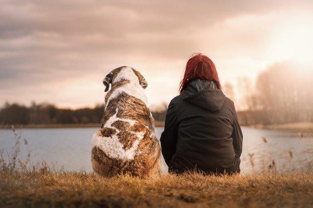 今日头条宠物广告怎么做?投放宠物广告怎么收费?